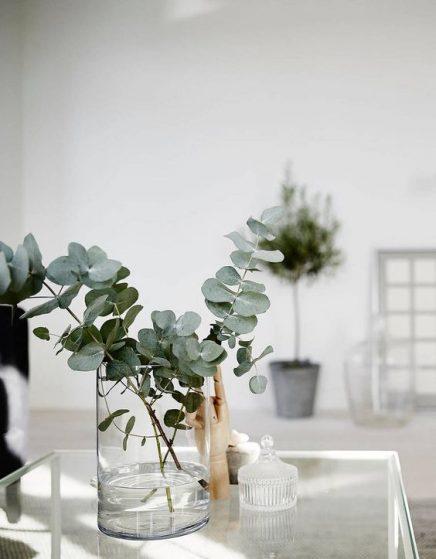eucalyptus-in-haus-15