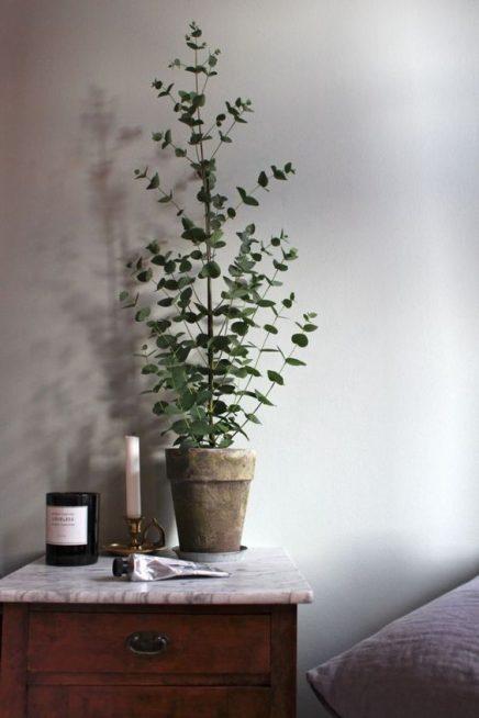 eucalyptus-in-haus-18
