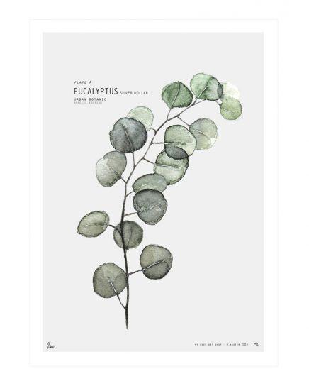 eucalyptus-in-haus-2