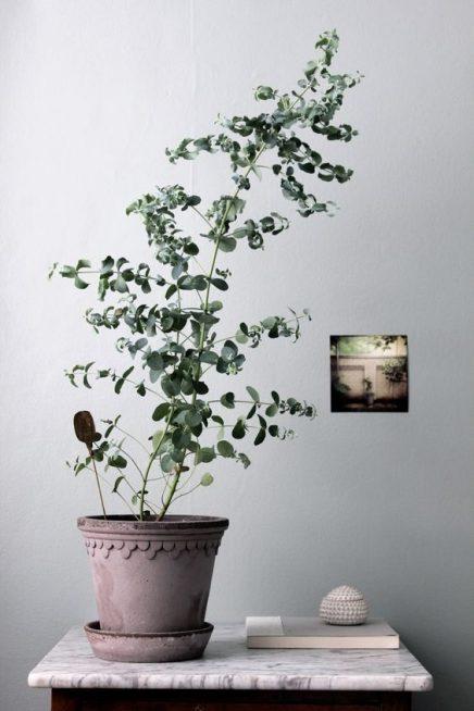 eucalyptus-in-haus-4