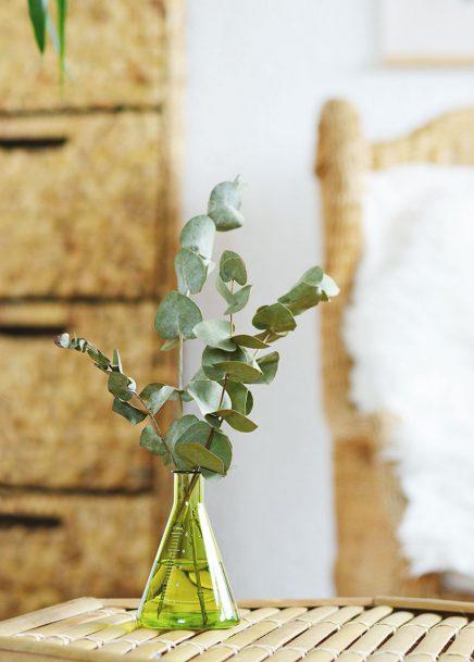 eucalyptus-in-haus-5