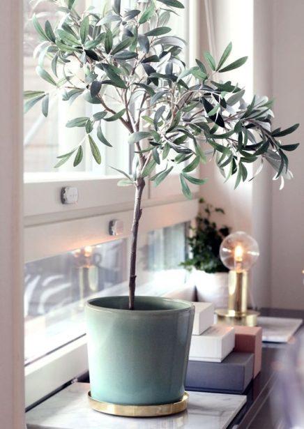 eucalyptus-in-haus-6