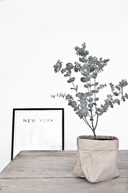 eucalyptus-in-haus-9