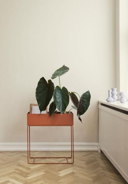 pflanzen-standard (1)