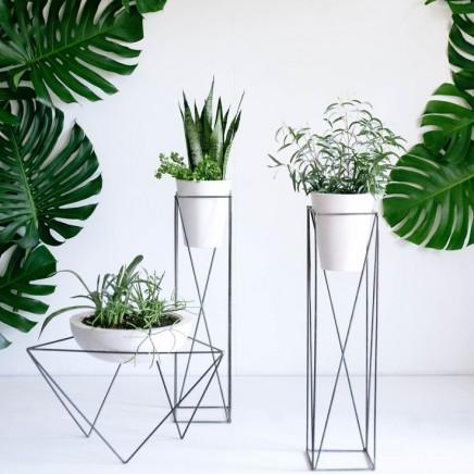 pflanzen-standard (11)