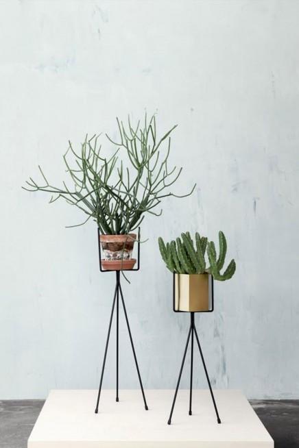 pflanzen-standard (12)