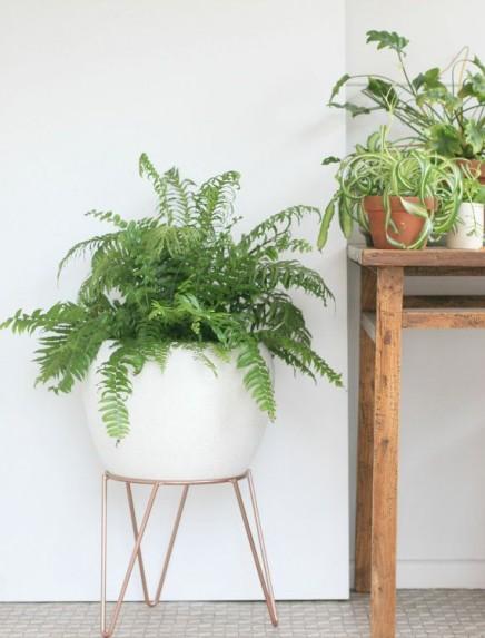 pflanzen-standard (14)
