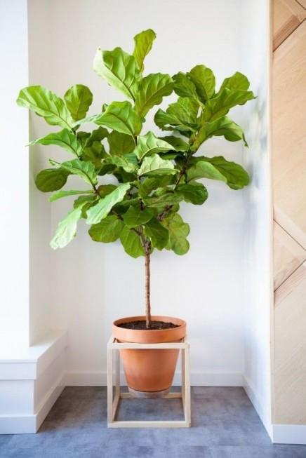 pflanzen-standard (3)