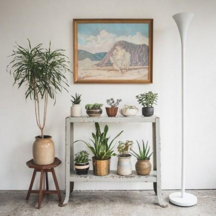 pflanzen-standard (4)