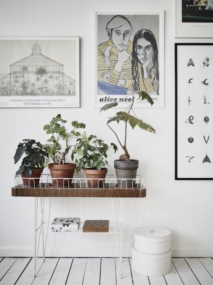 pflanzen-standard