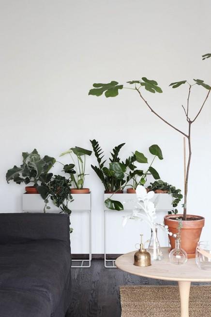 pflanzen-standard (5)