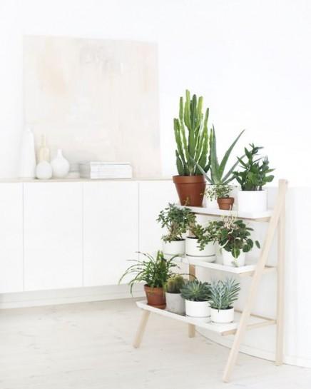 pflanzen-standard (6)