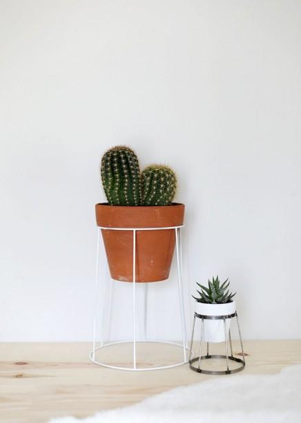 pflanzen-standard (7)
