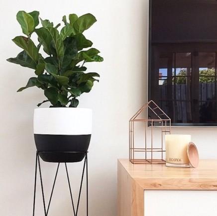 pflanzen-standard (9)