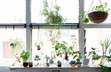 Wohnideen Pflanzen traum gemietet wohnung fotograf wohnideen einrichten