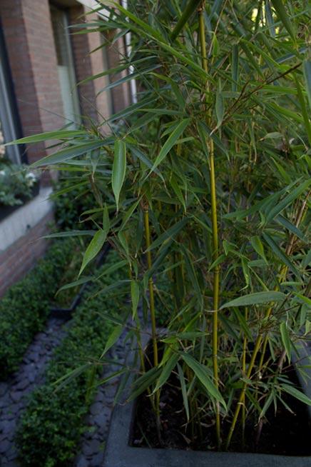 Vorne garten mit vielen Pflanzen